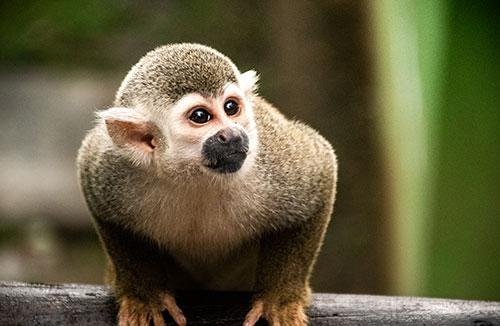 Monkeyland safari & zip line